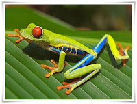 Frog Animal Pictures