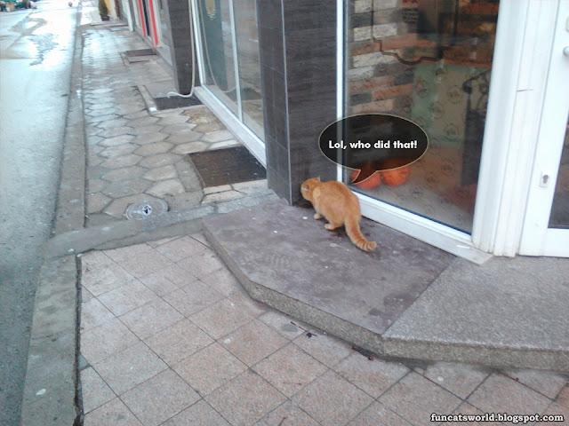 The Cat's Territory