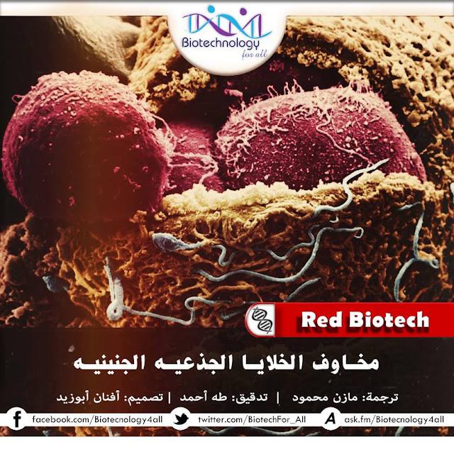 مخاوف الخلايا الجذعية الجنينية