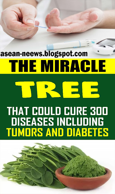 THIS TREE COULD CURE 300 DISEASES INCLUDING TUMORS AND DIABETES!