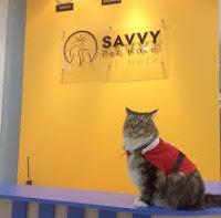 hotel khusus kucing di dunia