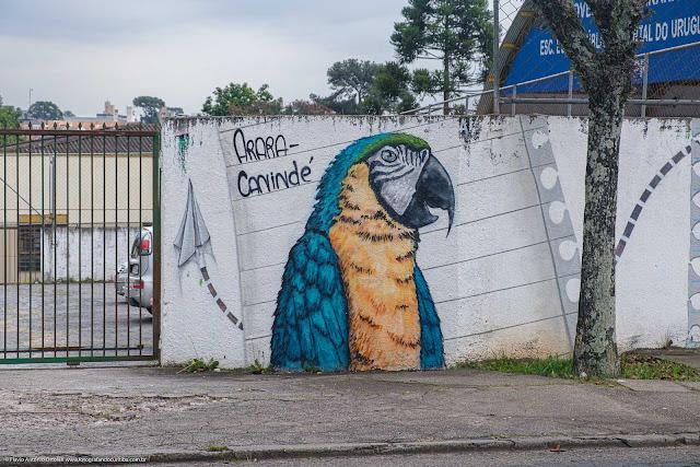Grafite com a pintura de uma arara no muro de uma escola