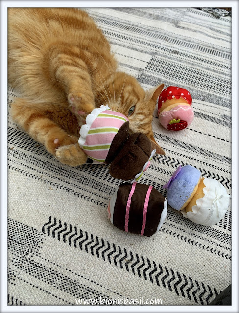 Friday Fluffers at BBHQ ©BionicBasil®  Fudge's Catnip Tea Pawty For One