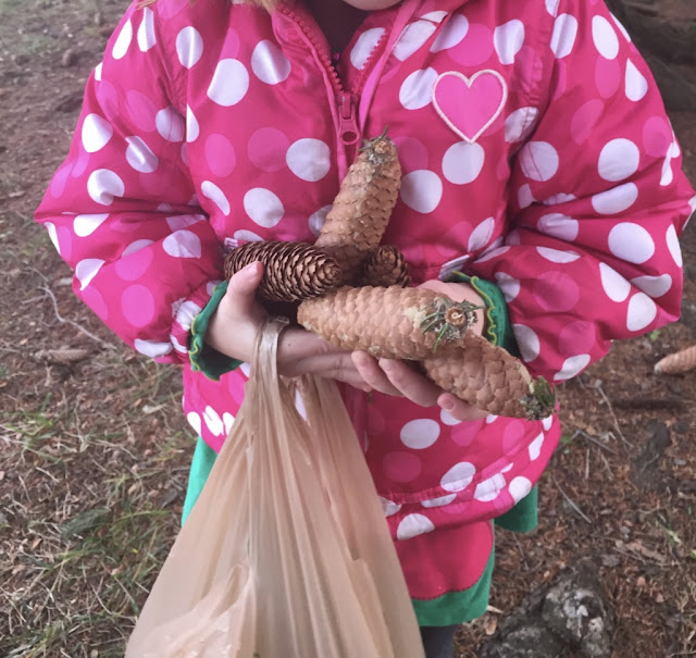child collecting pine cones and asking questions about the needles