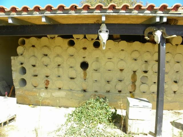 Apis mellifera cypria η Μέλισσα της Κύπρου