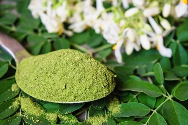 Moringa Oleifera, Moringa Miracle Plant and Health Benefits of Moringa Extract