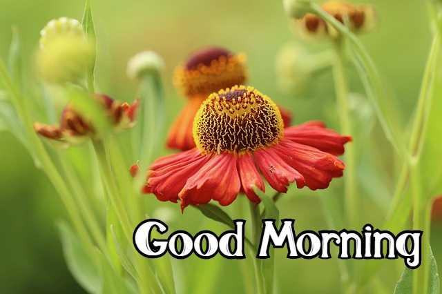 Good Morning Flower