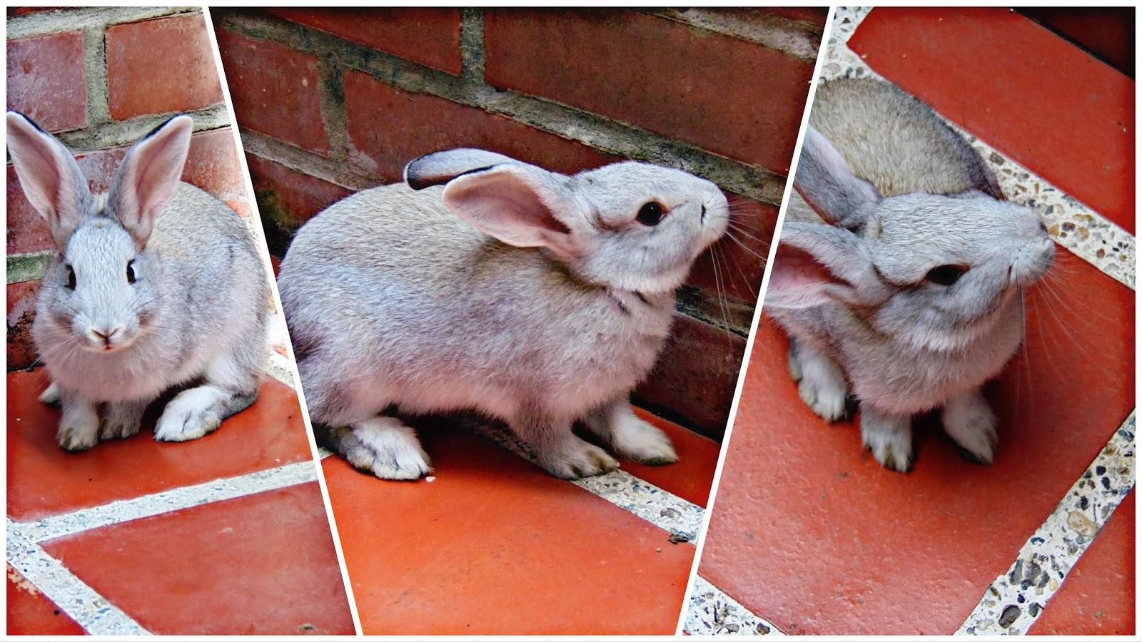 tips para el cuidado de tu conejo