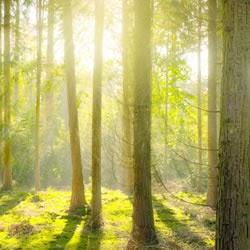 自然治癒を高めるは?自然が持つ自然治癒とは?