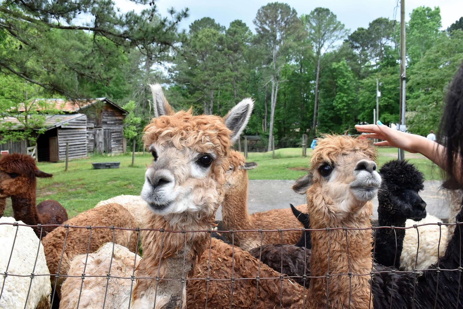 Creekwater Alpaca Farm