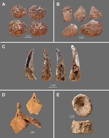 Néandertal, pionnier de l'exploitation des ressources marines
