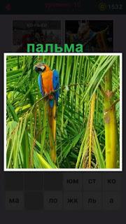 на ветке пальмы сидит цветной попугай