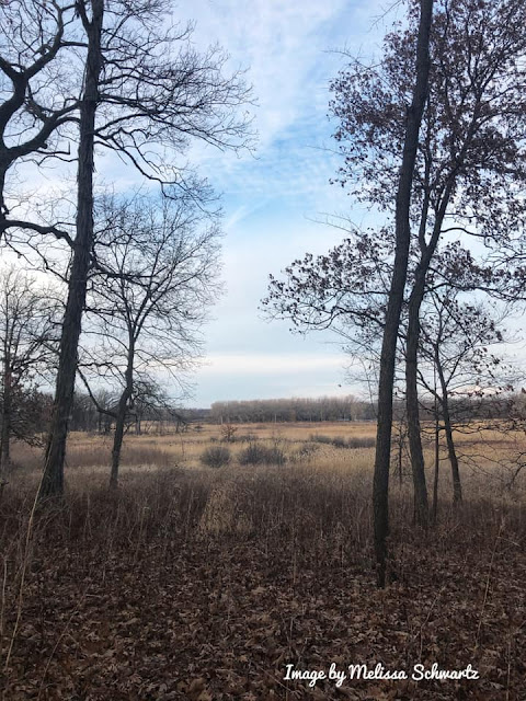 A natural frame of the grassland at Hickory Grove Highlands.