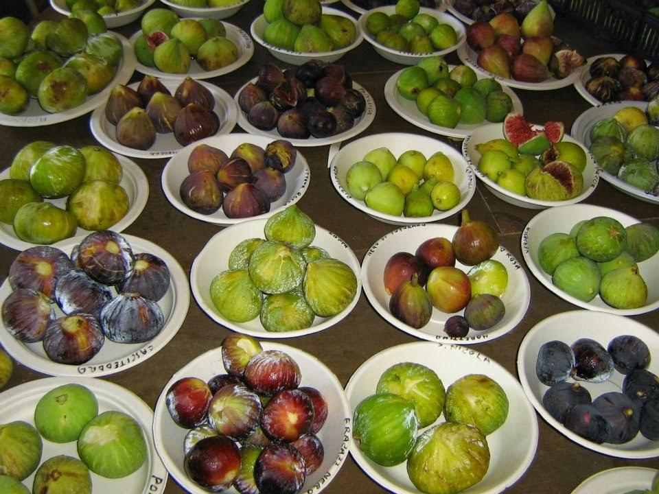 cara mengolah buah tin