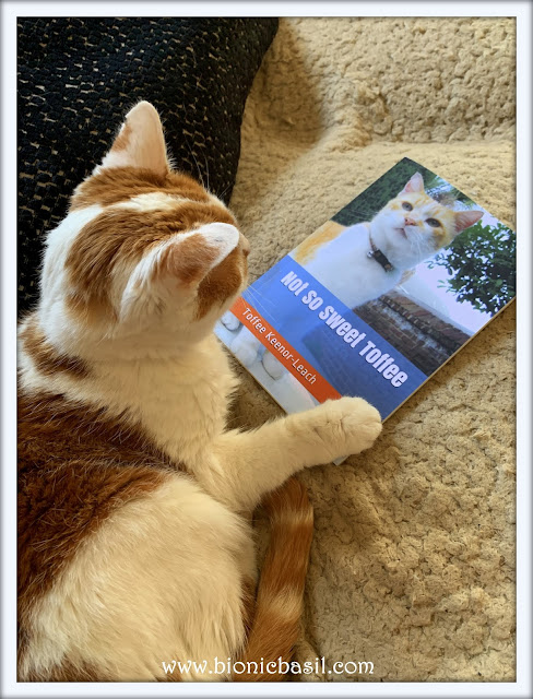 Feline Fiction on Fridays #128 ©BionicBasil® Not So Sweet Toffee - Amber's Purrsonal Copy