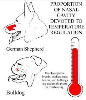 temperatura de cães