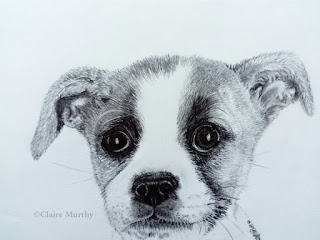 detailed graphite pet portrait dog