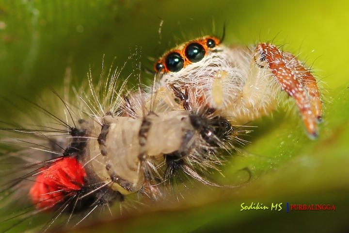 "Foto ""Kudapan Pagi"" ini merupakan foto macro dengan Canon Camera X50 + Lensa Tamron 90mm"