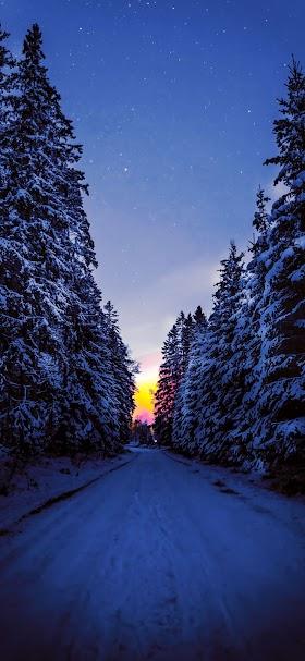 خلفية الطريق المغطاة بالثلوج وسط أشجار الغابة في الليل