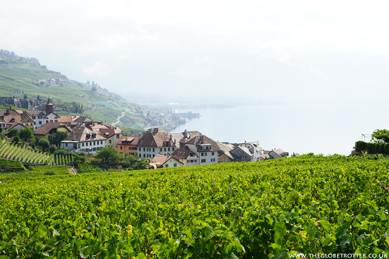 Lavaux UNESCO listed Vineyards