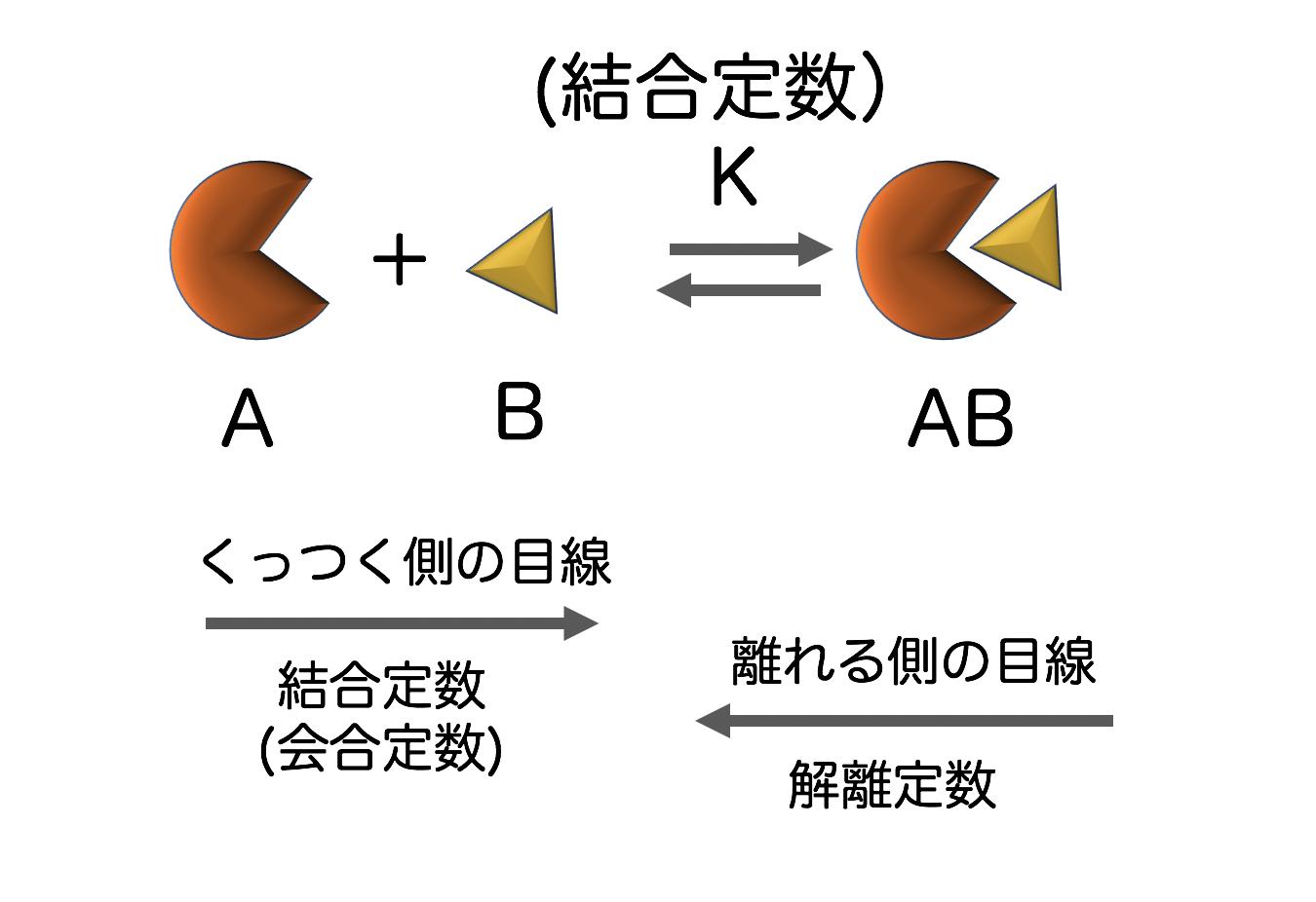 化学のススメ平衡定数・会合定数・解離定数・結合定数を理解する上で必要な4つのポイント