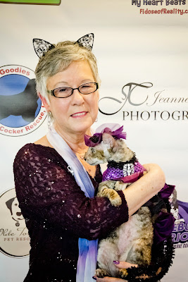 Coco the Cornish Rex at the HollyWoof Gala