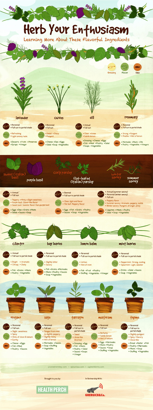 Infographic: Herb Your Enthusiasm