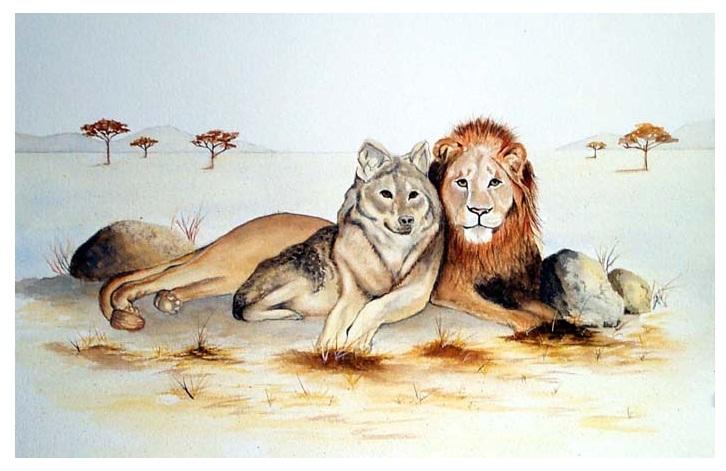 Лев и волк рисунок