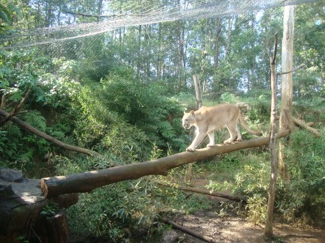 Animal no Gramado Zoo