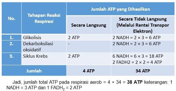 jumlah ATP yang dihasilkan proses respirasi