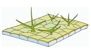Perhatikan gambar struktur jaringan tumbuhan dibawah ini ...