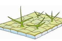 Perhatikan gambar struktur jaringan tumbuhan dibawah ini!  Pasangan yang tepat anatar ciri dan fungsi jarngan tersebut adalah ....
