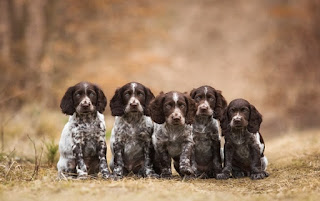 yeşillikler • köpekler • yapraklar • sevinç • Park • oyun • bahçe • köpek yavruları • çift • yürüyüş • beyaz• bir çift • Labrador • İkili • arkadaşlar • çalılar • iki • Av köpeği • iki köpek • av köpeği • iki yavru  alan • köpekler • beyaz • yaz • bak • çiçekler • ruh hali • glade • siyah • iki • Maki• köpek • çayır • köpek • çift • kırmızı • bir çift • Labrador • iki • namlu • köpek • köpek • Labradorlar • arka plan bulanık • iki köpek • haşhaş alan • yakışıklı • köpek • iki köpek  sonbahar • köpekler • bak • doğa • poz • konfor • ısı • arka plan • ruh hali • ateş • birlikte• iki • güzellik • pençeleri • battaniye • ateş • çift • ahşap • ekose • kutu • bir çift• İkili • yalan • iki köpek • kenar kömür ocağı • benekli • birlikte  orman • köpekler • bak • doğa • poz • Park • koyu arka plan • iki • köpek • bitkiler • bebek• çift • köpek yavrusu • beyaz • bir çift • Labrador • İkili • yalan • Av köpeği • iki köpek • yüzler• anne ve çocuk  yol • sonbahar • köpekler • bak • yüz • ışık • doğa • poz • arka plan • köpek • yavru• kırmızı • arkadaşlık • çift • Trident • köpek yavrusu • kırmızı • bir çift • Labrador • Altın • İkili• arkadaşlar • şapka • şapka • cins • Av köpeği • oturma • iki köpek • yakışıklı • avrasya • iki yavru dil • köpekler • yaz • mutluluk • doğa • poz • arka plan • portre • dostluk • çift • bir çift• İkili • arkadaşlar • iki köpek • kenar kömür ocağı • Avustralyalı çoban • sarılmak • Avustralyalı