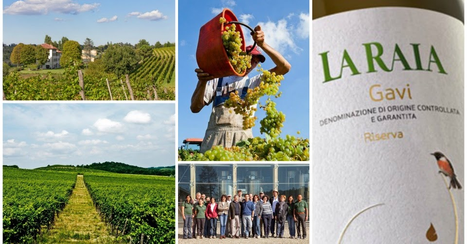 La Raia - Modernità e rispetto convergono nella produzione di Vini biodinamici