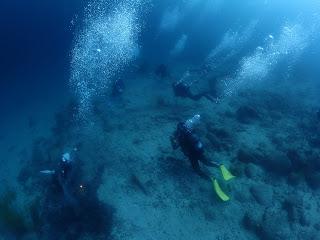 2021年6月20日の柏島ダイビング