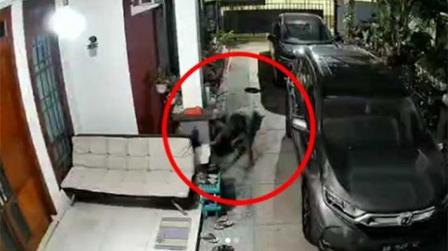 3 Pencuri Spesialis Aglonema Ditangkap, Ngaku Dapat Untung Jutaan Rupiah