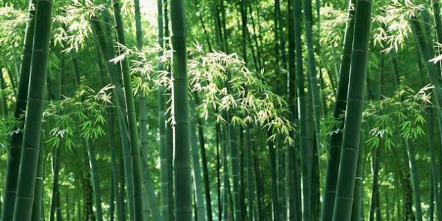 Mengapa China Disebut Negeri Tirai Bambu