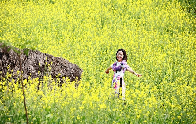 Blooming canola terraces a new tourism draw 2