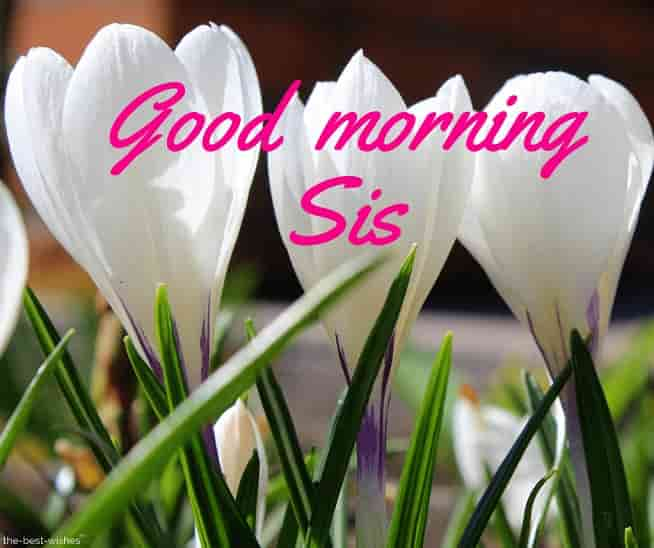 good morning sis hd images