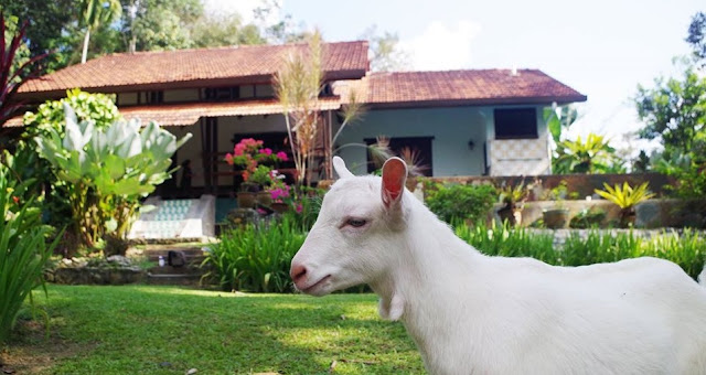 Review: Percutian Pendek Keluarga Di Glamgoat Aman Dusun Farm Retreat, Hulu Langat