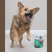 Nulo Freestyle Trainers Dog Treats Review