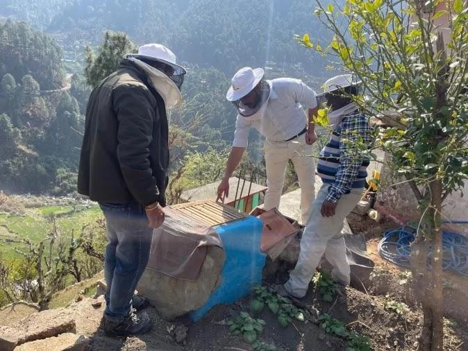 उत्तरकाशी के मानपुर गांव में मौनपालन के बी बाक्स की जांच करते विशेषज्ञ।