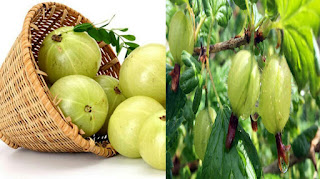 Mountain gooseberry, which is a vitamin in vitamin C, has enough flavor to eat w