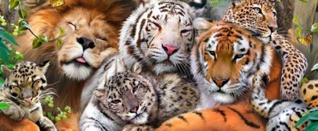 بحث شامل عن عالم الحيوان - عالم الحيوان