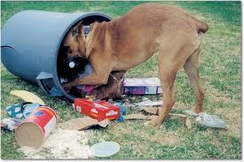 Tips For Dog Owners Keep Your Dog Out Of The Garbage