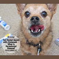 Pet Dental Month with Oratene® - What is Periodontal Disease?
