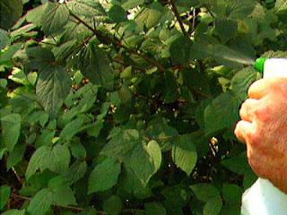 macam-macam-fungisida-tanaman.jpg