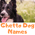 Ghetto Dog Names | Male Female Names