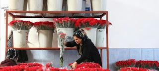 """60 مليون زهرة تركية تزين """"الفالنتين"""" في 50 دولة حول العالم"""