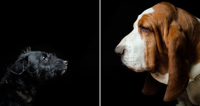 foto de perro grande y pequeño